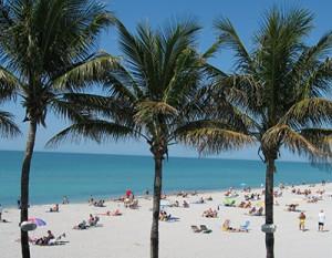 3-07-people-&-palm-trees